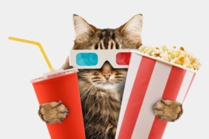 cat watching movie